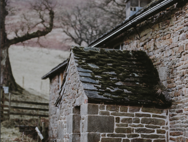 Why Removing Moss from Your Roof Is Vital